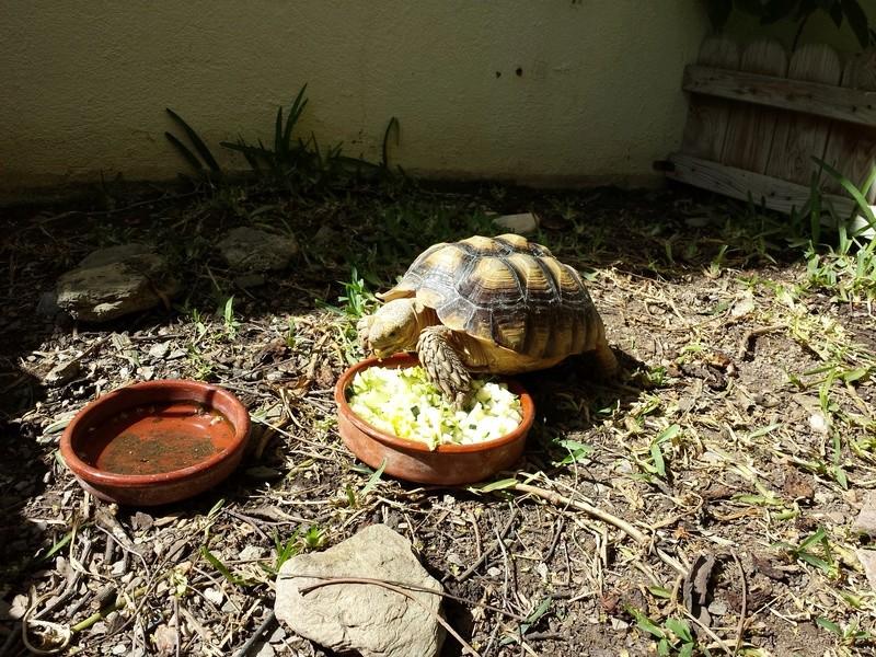 Tortuga tragamonedas 2016-110