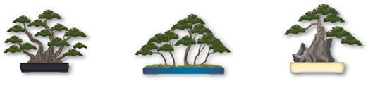 pretutorial para crear un bonsai de pino 10111210