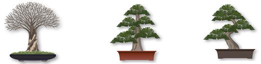 pretutorial para crear un bonsai de pino 12310