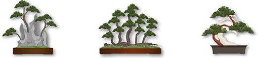 pretutorial para crear un bonsai de pino 13141510