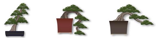 pretutorial para crear un bonsai de pino 45610