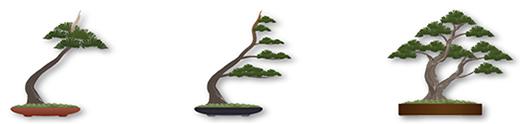 pretutorial para crear un bonsai de pino 78910