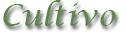 pretutorial para crear un bonsai de pino Cultiv10
