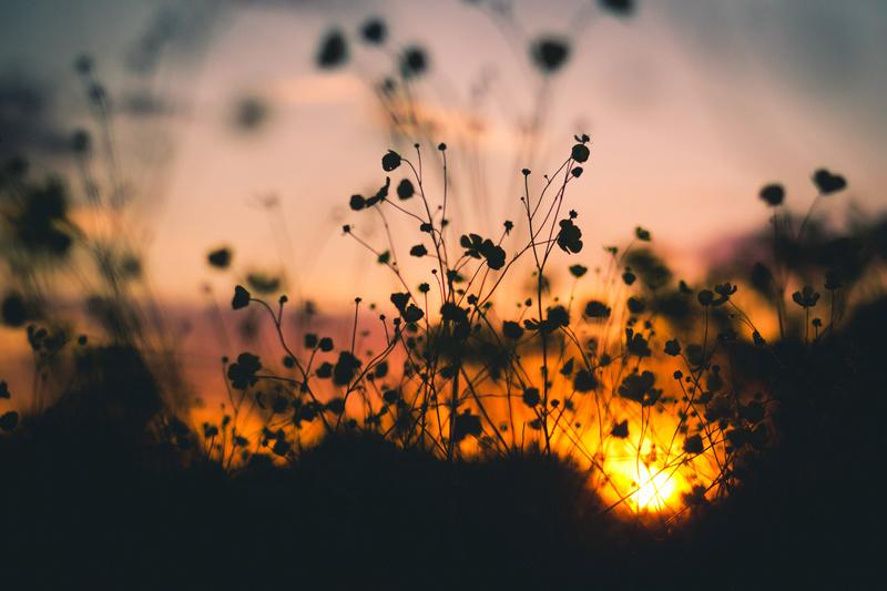 Bóng chiều tà (thơ ĐL dp) Sunset10
