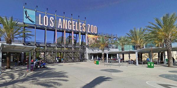 Los Angeles Zoo Zoolae11