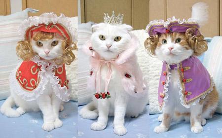 ¿Qué animal te representa? Cat_cl10