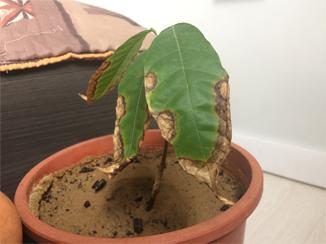 Du Cacao dans les Landes Cacaoy11