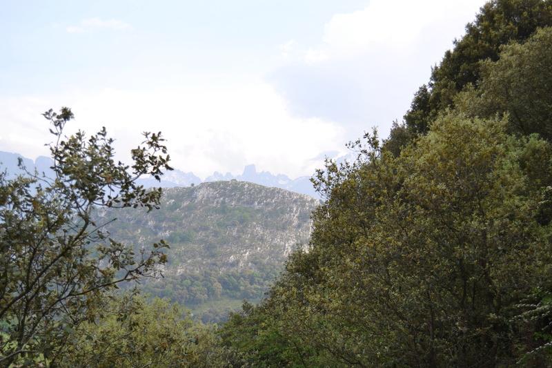 Mina Ninón (mina La Sierre o Santa Amelia). Cabrales Dsc_3518