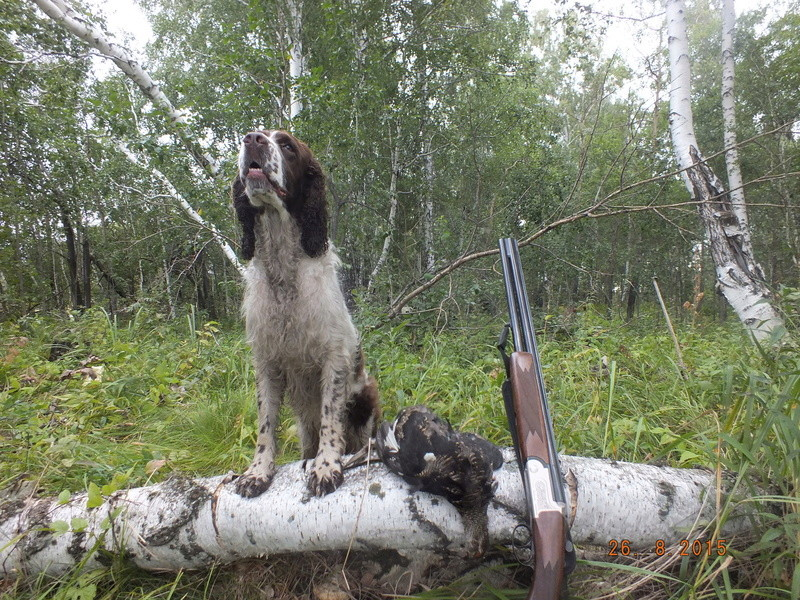 Друг охотника английский спрингер спаниель Dscf2013