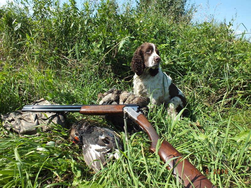 Друг охотника английский спрингер спаниель Dscf2711
