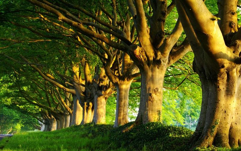 Заговор на получение здоровья от деревьев 2510