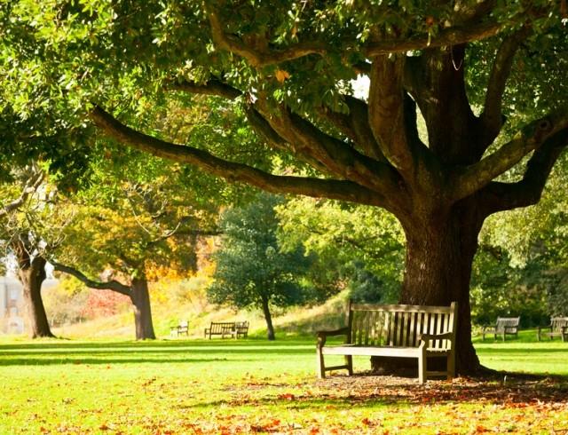 Магия деревьев в помощь городским жителям E10