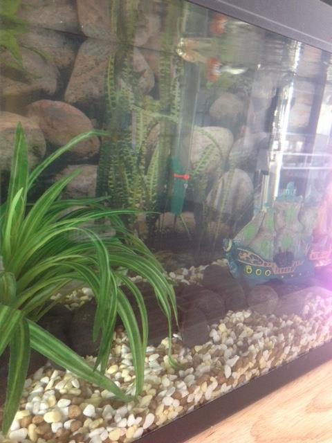 Mes poissons :) 310