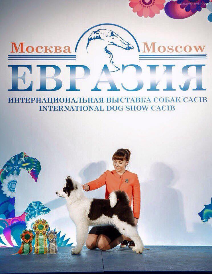 """Интернациональная Выставка Собак """"ЕВРАЗИЯ-2017"""" 17-19 марта 17309011"""