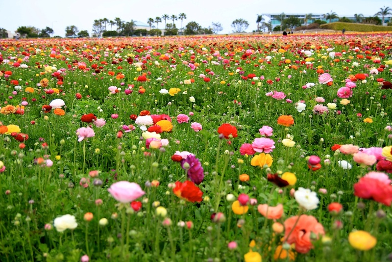 Flowerclan Info 36827010