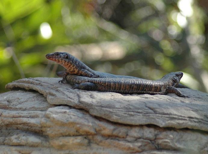 Centre des Reptiles avec VolonTerre Africa en Afrique du Sud Captur22
