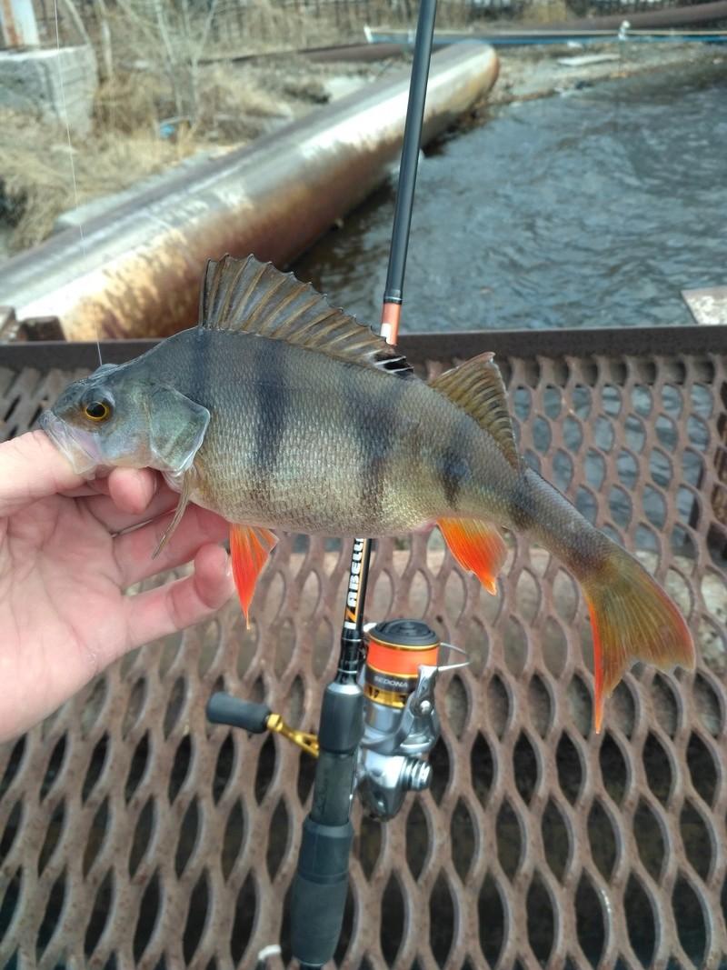 Отчёты о рыбалках - Страница 31 Img_2013