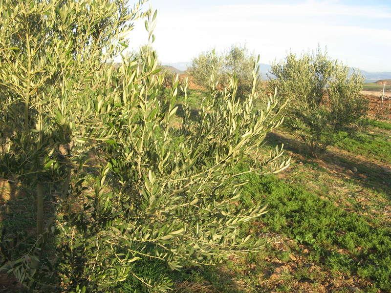 Análisis foliar AMZ Logroño (La Rioja) Img_1530