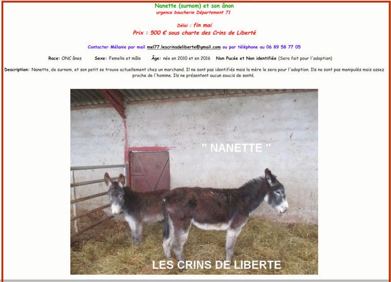 (Dept 71) Cookie (dcd), Guizmo et Lucie -ânes - Sauvées par Valérie L. (2017) Nanett10