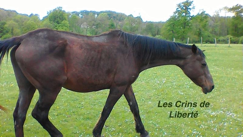 Dp 77, 27 ans, Cécile d'Incoville, jument TF, sauvée par Elodie - Page 2 P_201719