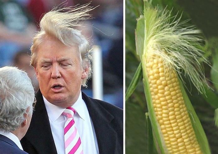 Corn V Trump Things10