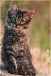 [ KITTENS ] Let's get one thing straight: I'm not - Pagina 2 Chicke11