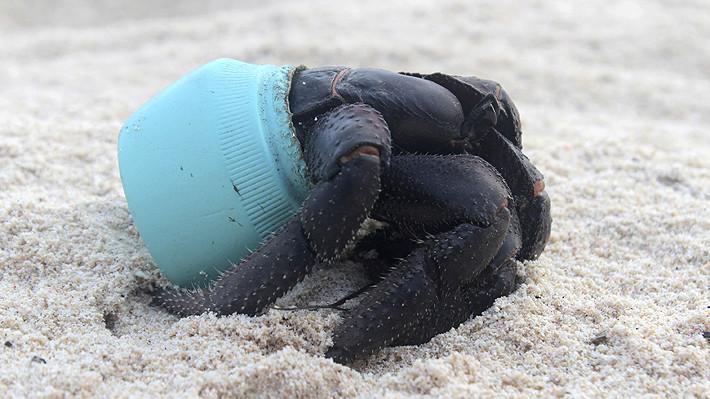 el plástico acabará con los océanos...... Hender10