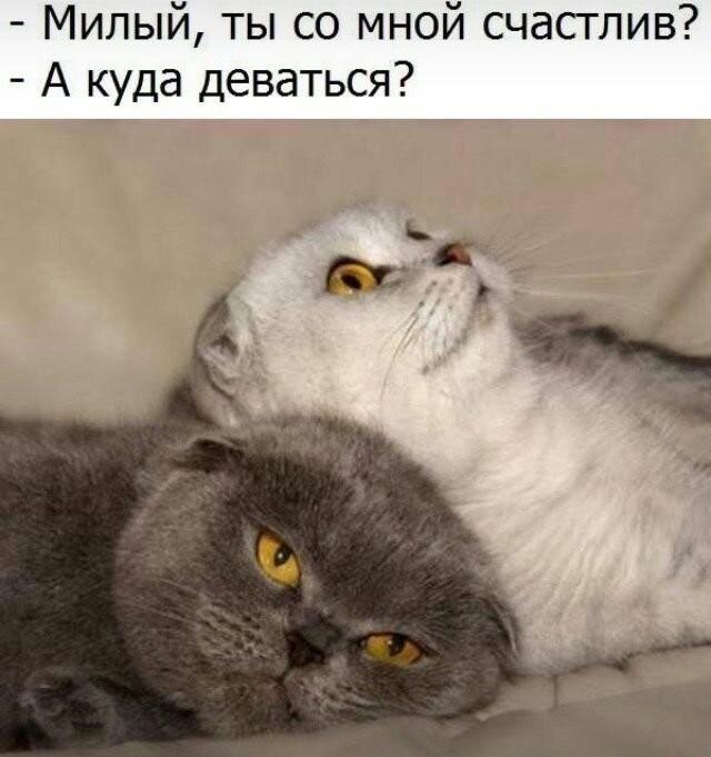 Поюморим? Смех продлевает жизнь) - Страница 3 Image310