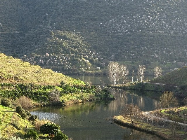 Douro - DOURO Primavera antecipada Dsc09314