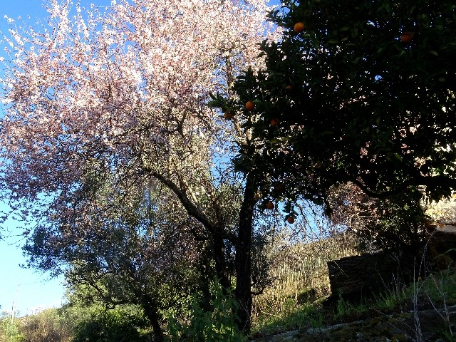Douro - DOURO Primavera antecipada Dsc09324