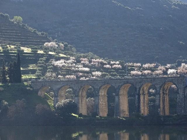 Douro - DOURO Primavera antecipada Dsc09328