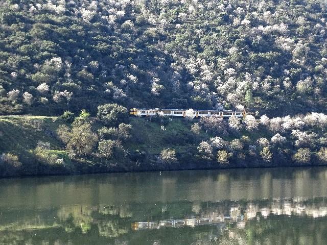 Douro - DOURO Primavera antecipada Dsc09334
