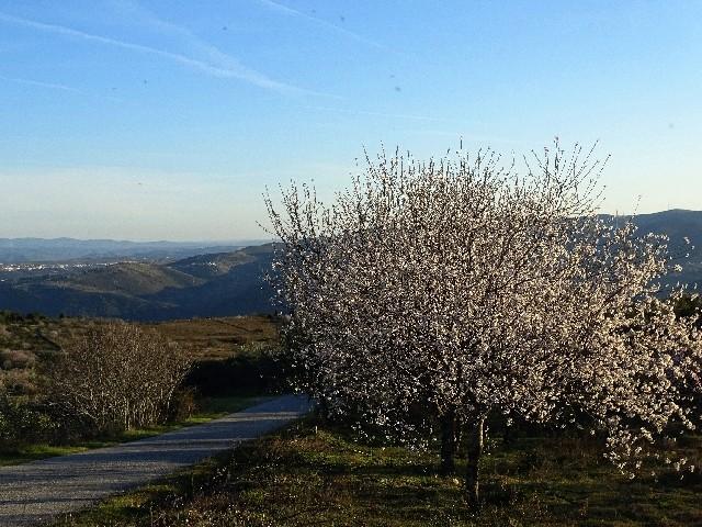 Douro - DOURO Primavera antecipada Dsc09421