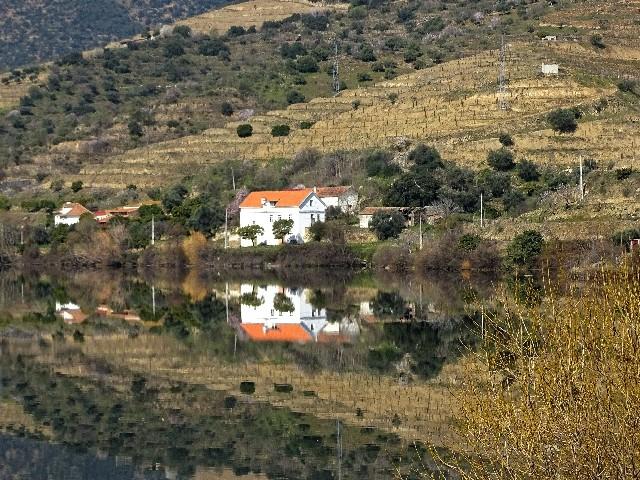 Douro - DOURO Primavera antecipada Dsc09427