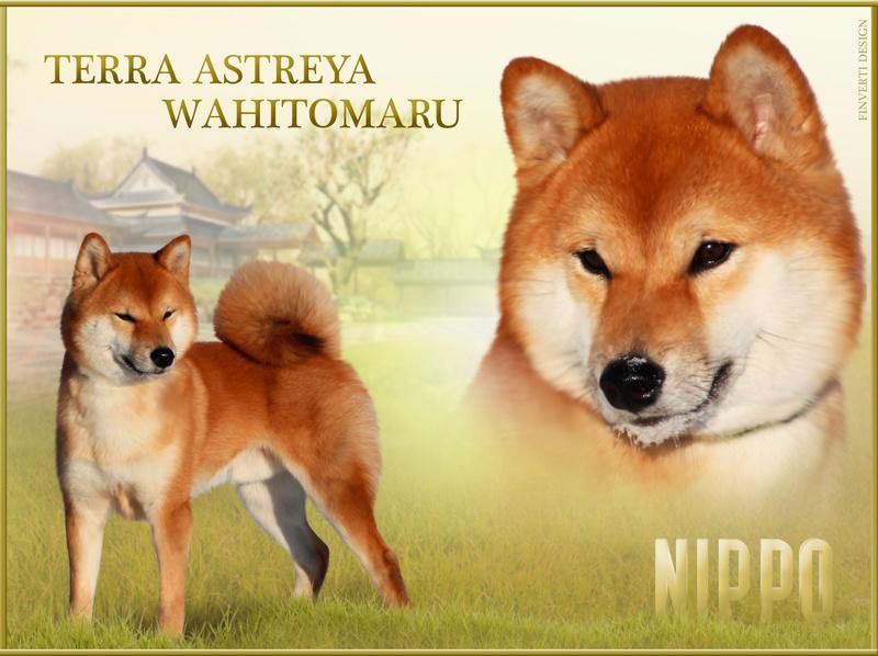 TERRA ASTREYA WAHITOMARU K-dgg410