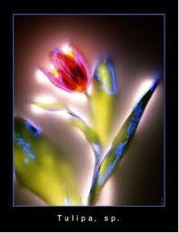 La Fotografía Kirlian de Alta Frecuencia según P. Mandel Kirlia12