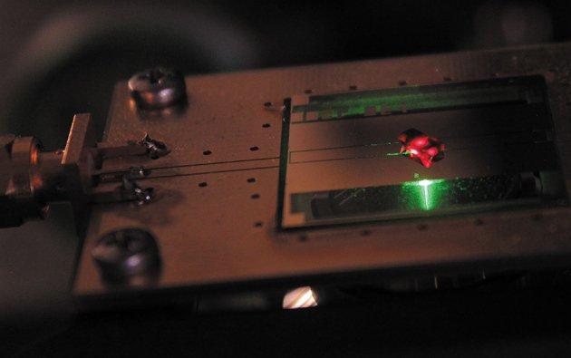 Официально: Кристаллы времени - новое состояние материи, и теперь мы можем создавать их. Diamon10