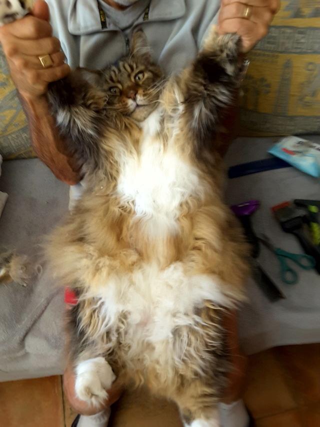 pour les amoureux des chats 20161110