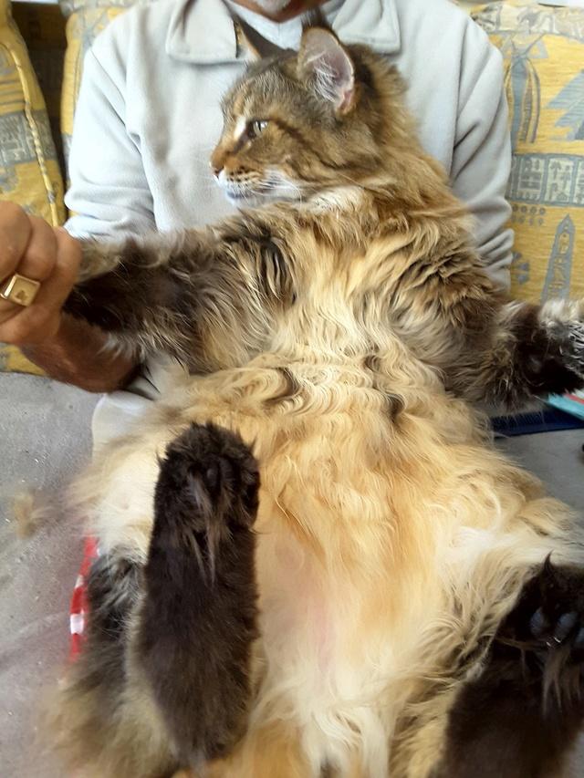 pour les amoureux des chats 20161113