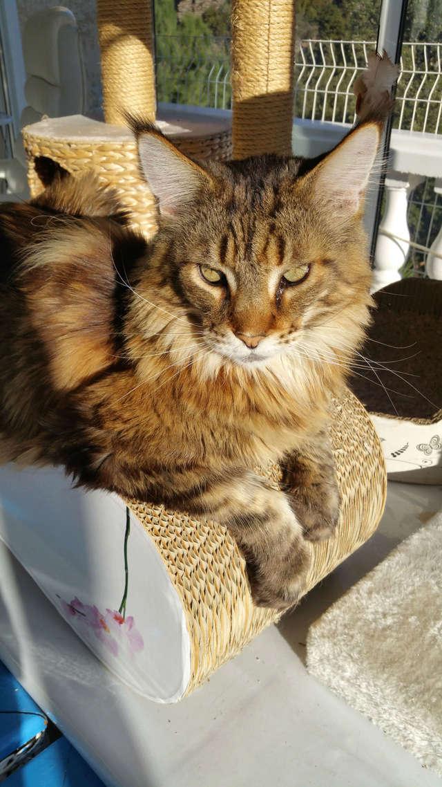 pour les amoureux des chats 20161211