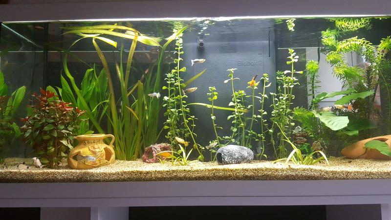 Aquarium de 120 litres  20170311