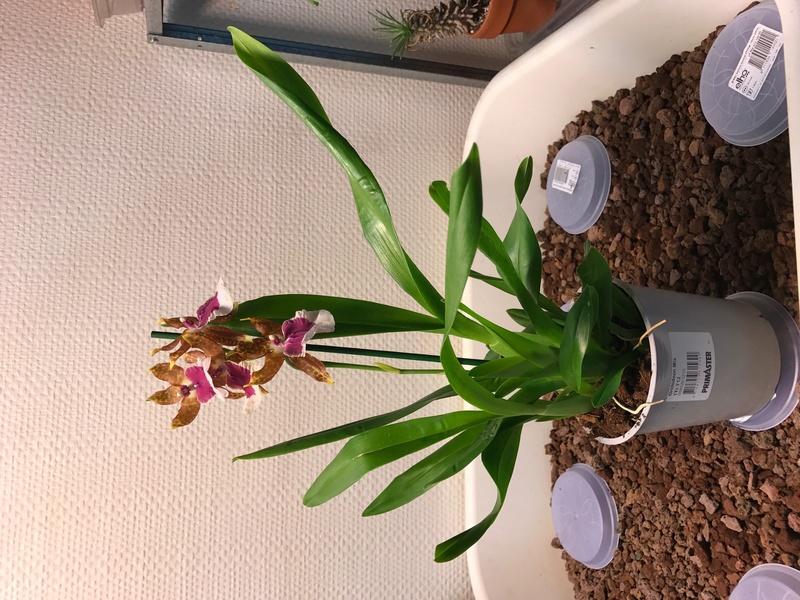 05 orchidées à identifier  Img_0163
