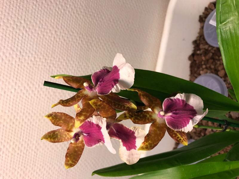 05 orchidées à identifier  Img_0164