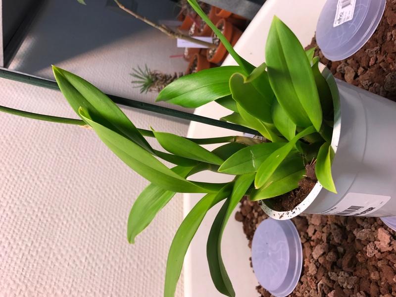 05 orchidées à identifier  Img_0165