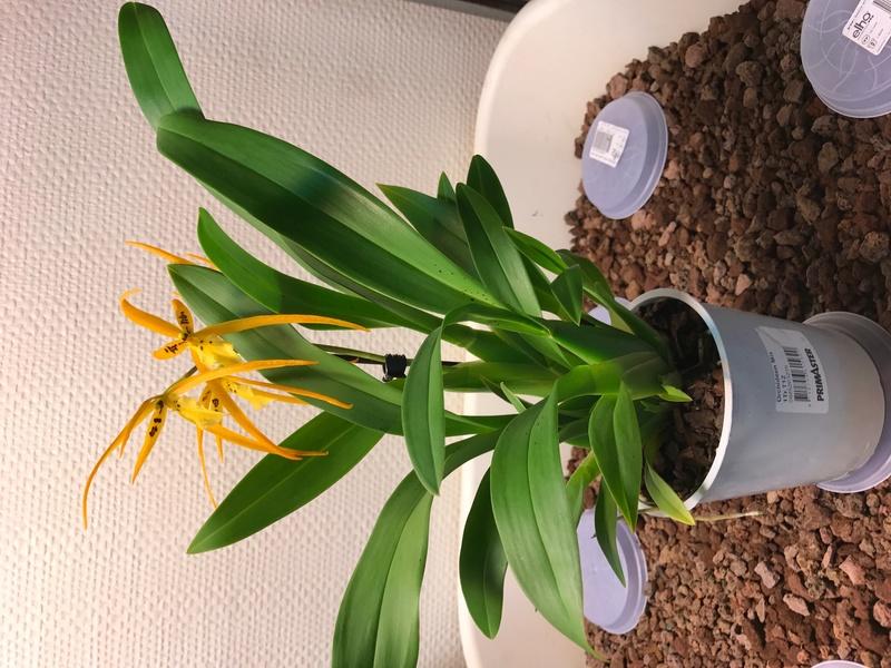 05 orchidées à identifier  Img_0166
