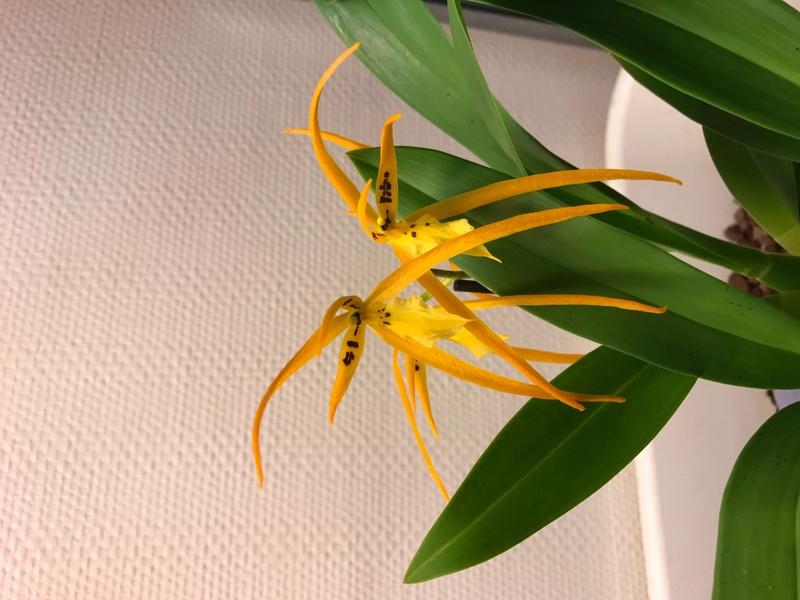 05 orchidées à identifier  Img_0167