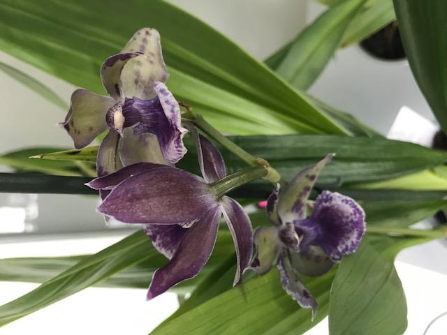 04 orchidées à identifier Img_0190