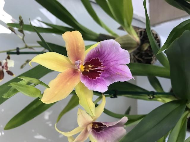 04 orchidées à identifier Img_0192