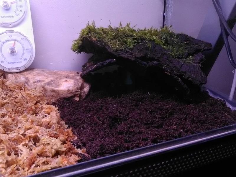 Terrarium pour Ceratophrys Img_2012