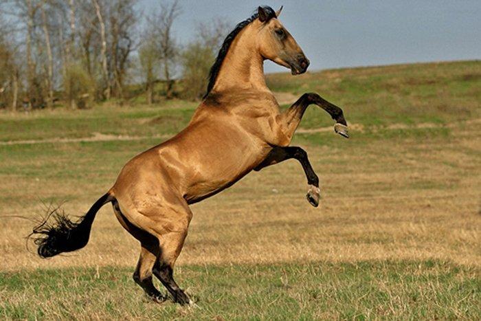 07.1253 – 09.1253, Лошадь – это поэзия в движении Orlovs11